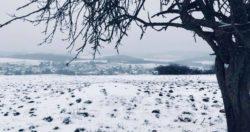 Hengen im Schnee